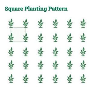 diagram-sq