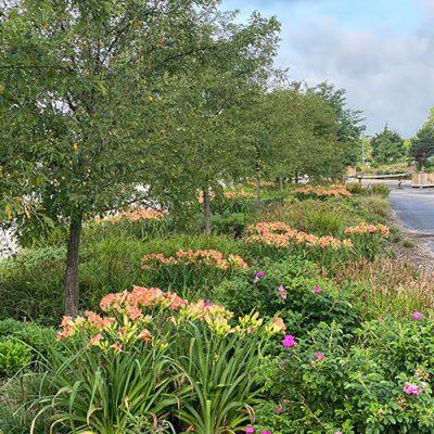 median garden 2