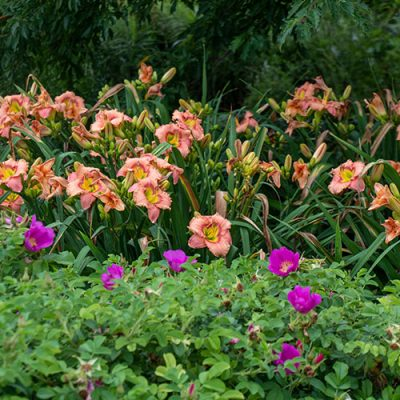 median garden 3