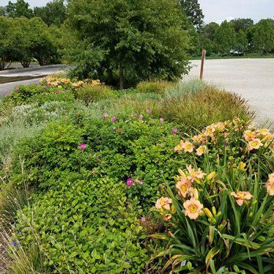 median garden